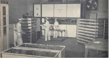 Bread and Pastry production at the Cabot Bakery circa 1950. (Atlantic Guardian)