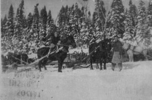 George Rowsell's horses in the woods of Bishop's Falls Division 1930's-1940's (Point Leamington Heritage Society)