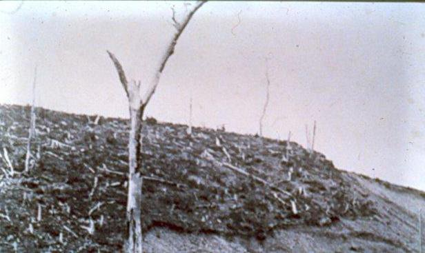Forest fires in 1897 and 1904 have burned over much of the Grand Falls area before construction of the mill and town began.