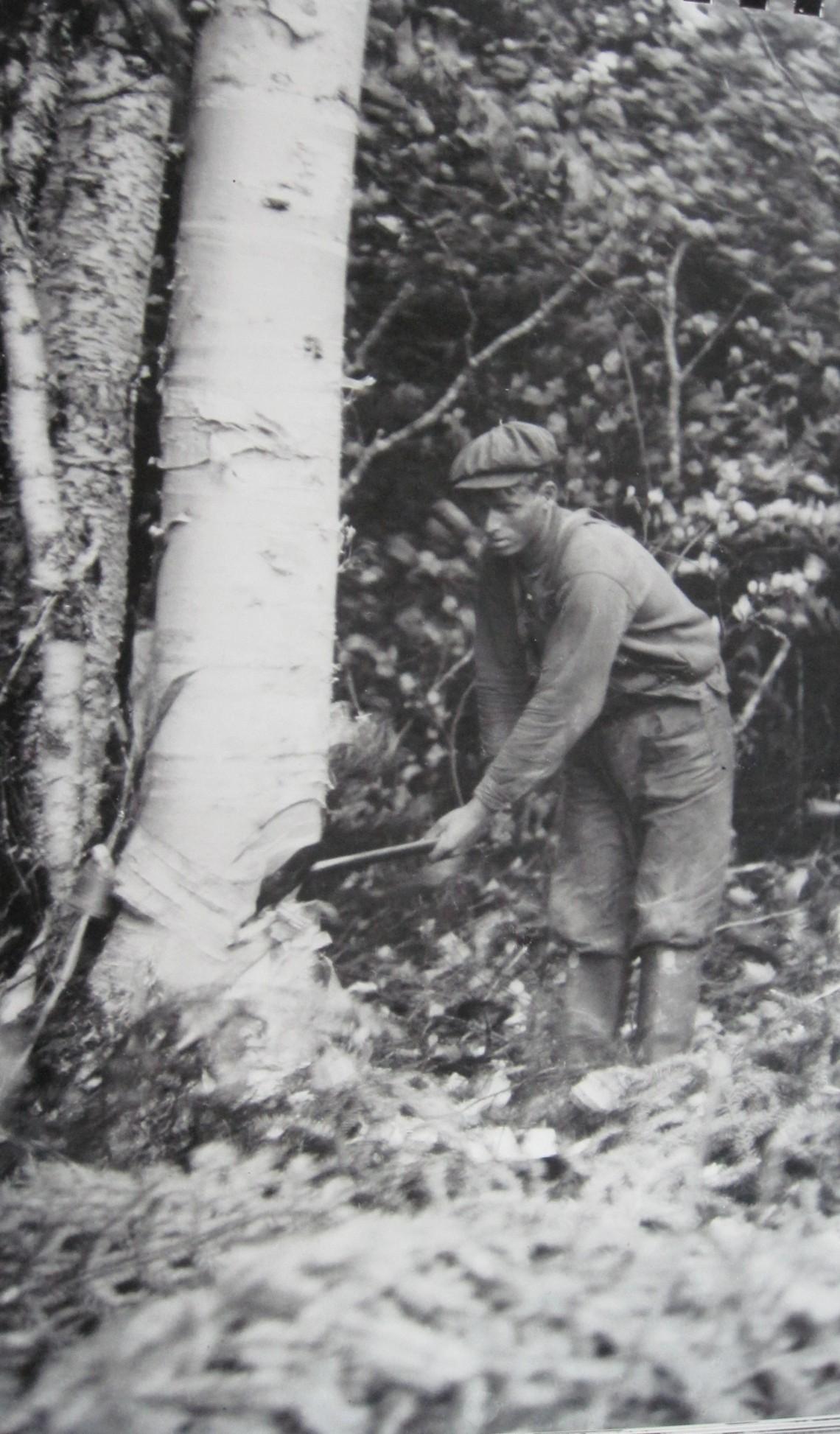 A.N.D Co logger chopping down a tree circa 1919. (GFWHS)