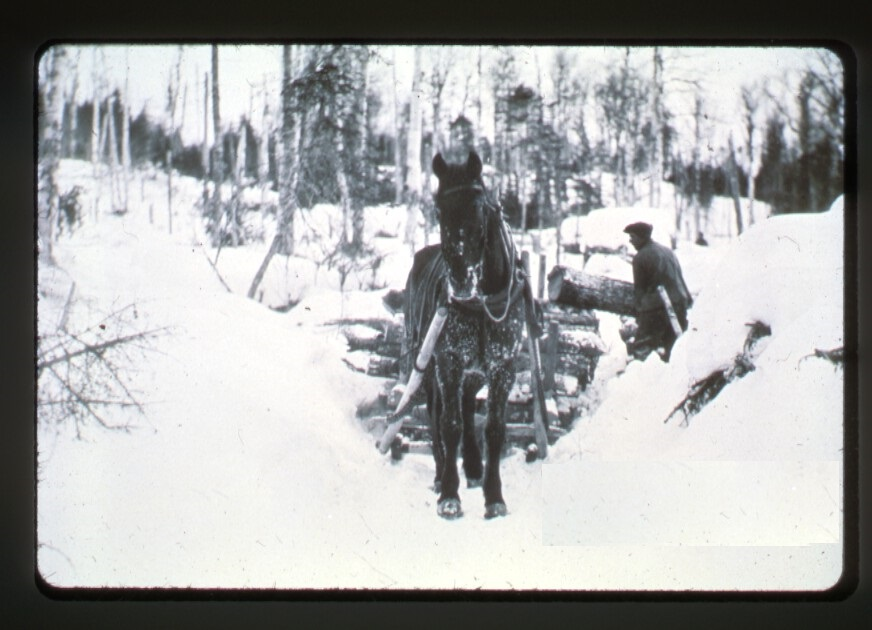 Haul off horse and sled