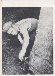 Logger with bucksaw AG 1947