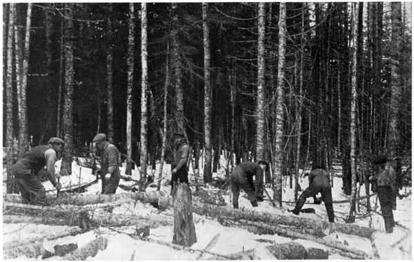 cutting pulpwood 1925