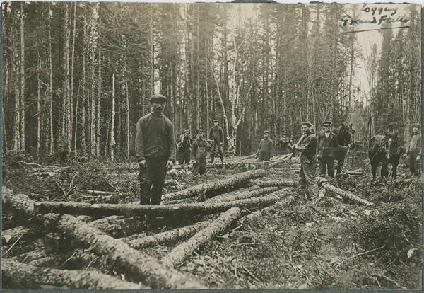 Some of the first AND Co  loggers cutting pulpwood  around Red Indian Lake 1908. The men cut logs with axes and crosscut saws and skidded out full length logs by horse. Within a few years these methods had fallen from fashion in favor of cutting short wood and winter hauling.