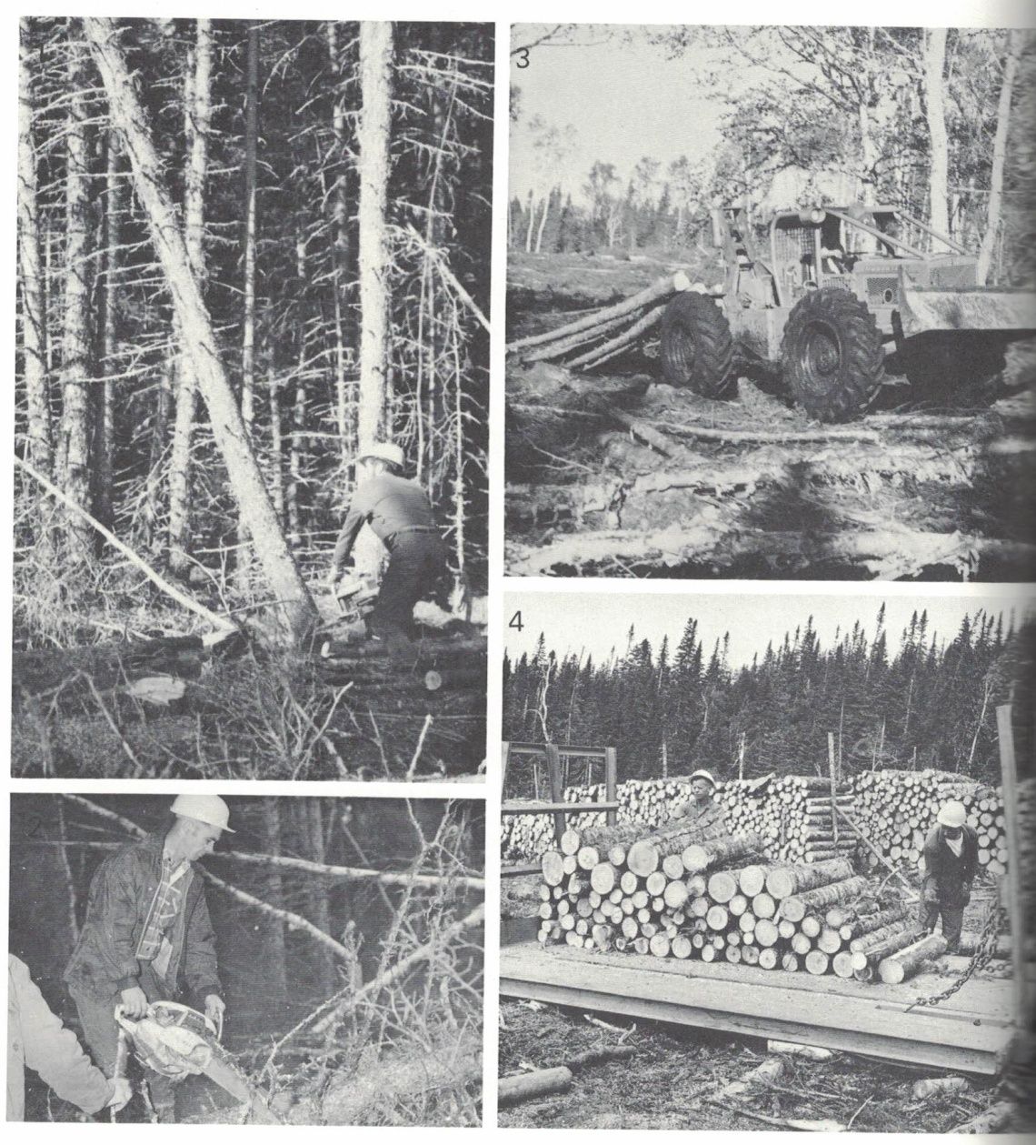 The introduction of the powersaw and skidder in the 1950's and 60's revolutionized pulpwood cutting and led to a drastic decrease in the number of men needed in the woods. (from Forestry in Newfoundland)