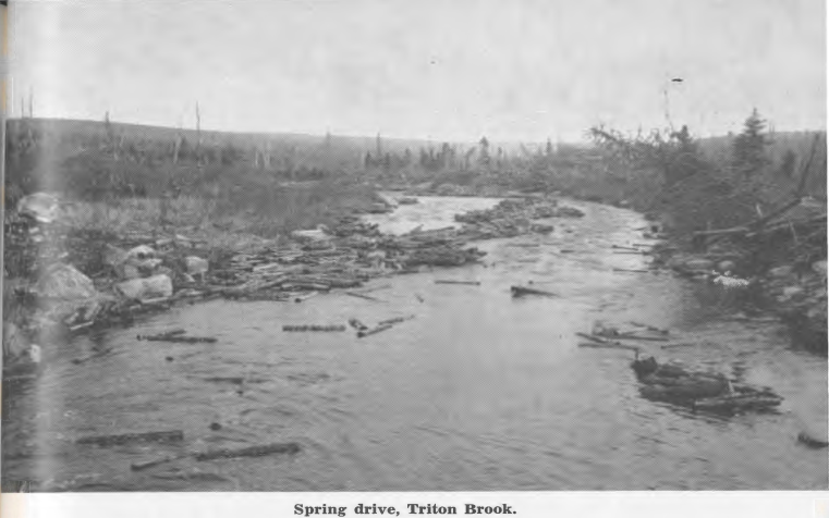Log drive on Triton Brook near Gambo circa 1955. The 1930s-1960s saw pulpwood drives on hundreds of brooks and streams as the AND Company drove short pulpwood to the mill. The wood pictured here is 4 foot pulpwood.