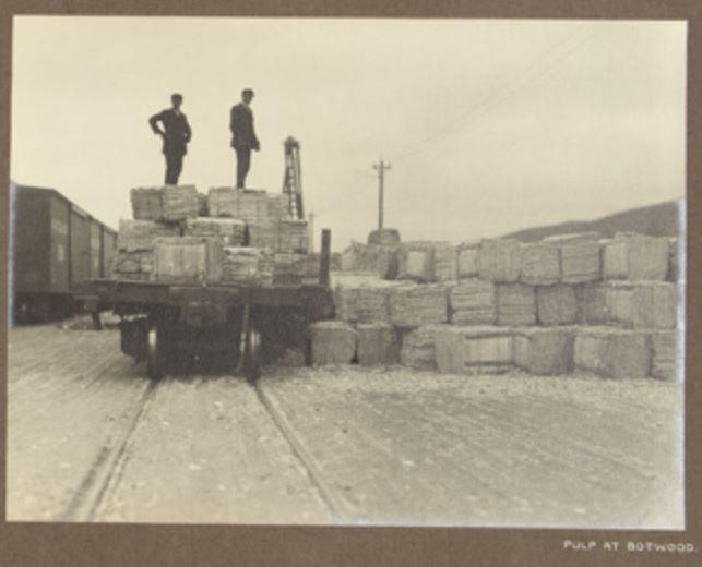 pulp at Botwood 1912 Hayward
